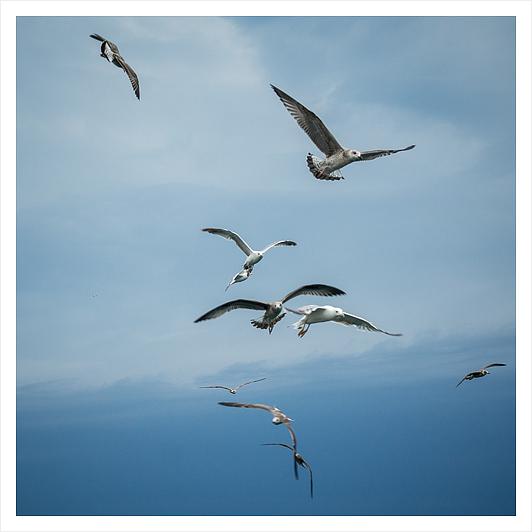 Seagulls_b