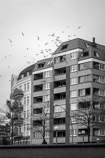 Fåglarna-1